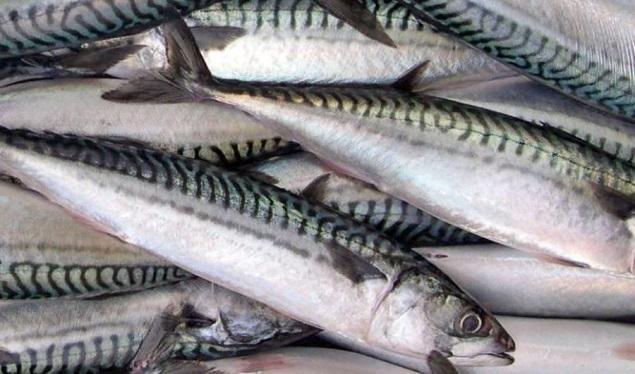 Русские рыболовы спустя четверть века взялись засельдь иваси