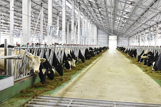 ВБелгородской области запущен молочной комплекс «Зеленой долины»
